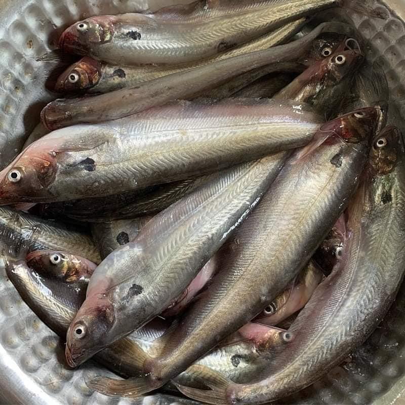 pabda-fish