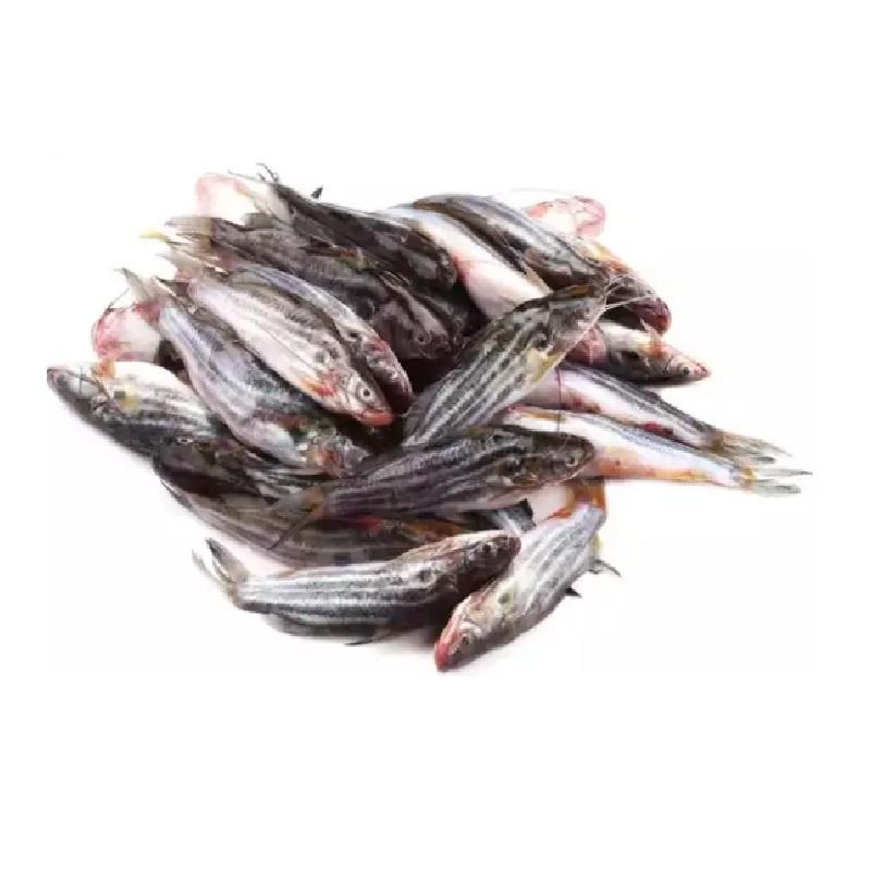 tengra-fish-deshi