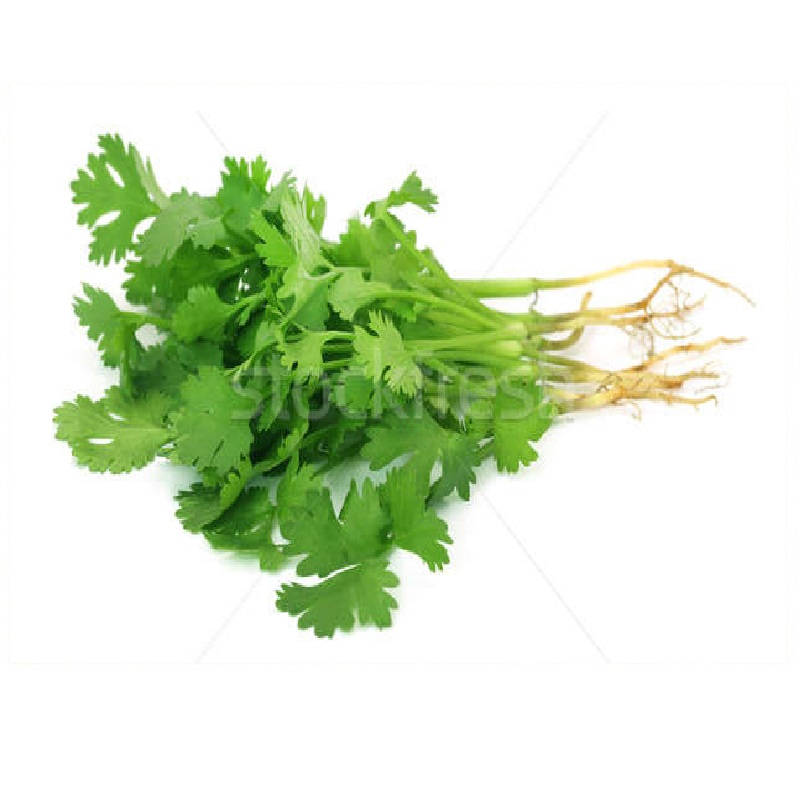 fresh-coriander-leaves