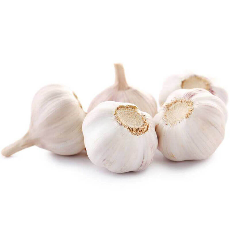 local-garlic-small