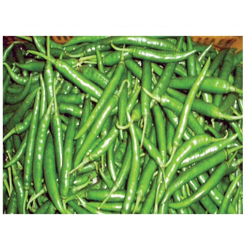 green-chili-কাঁচা-মরিচ