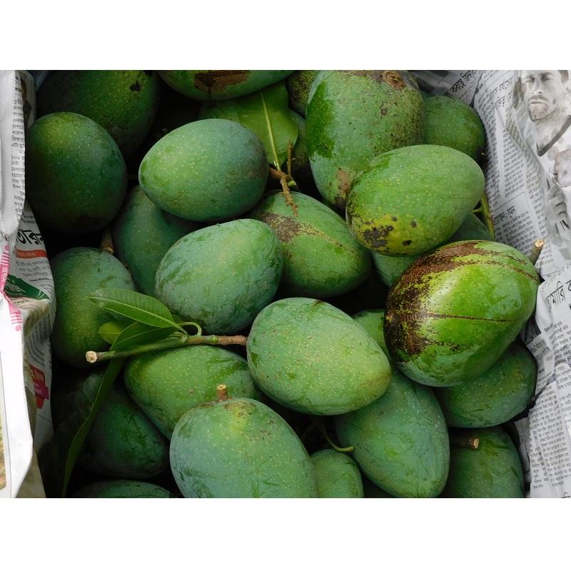 khirshapat-himsagar-mango-aam