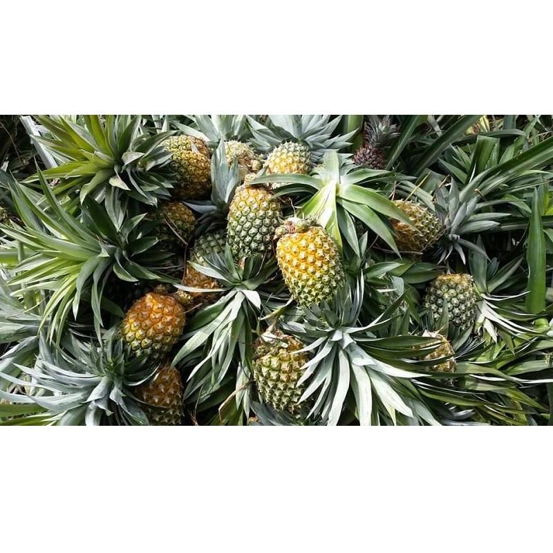 calendar-pineapple